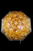Dáždnik listy